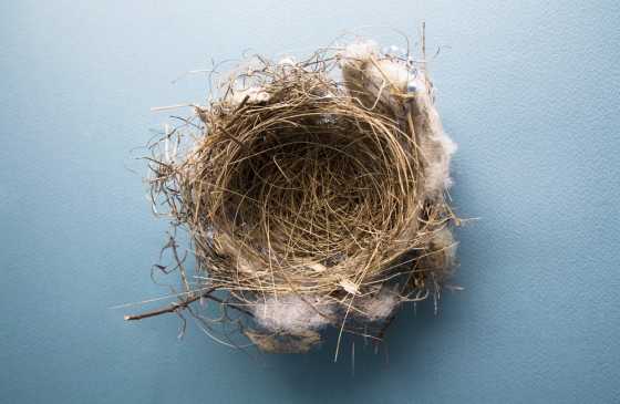 an empty bird nest