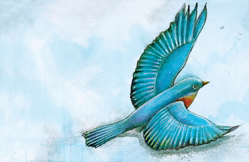 An artist's rendering of a bluebird on the wing