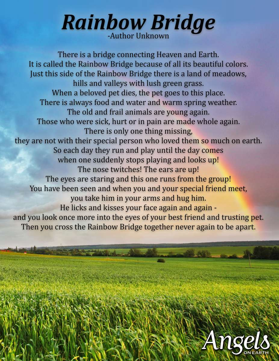 Image result for the rainbow bridge
