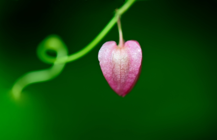 10 Amazing Quotes About God's Love | Guideposts
