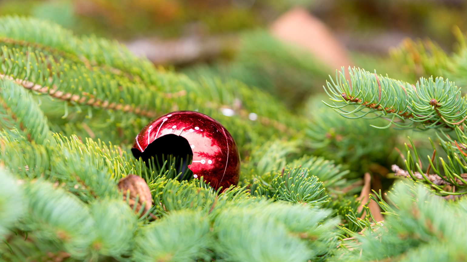 A broken Christmas ornament on top of Christmas tree leaves.