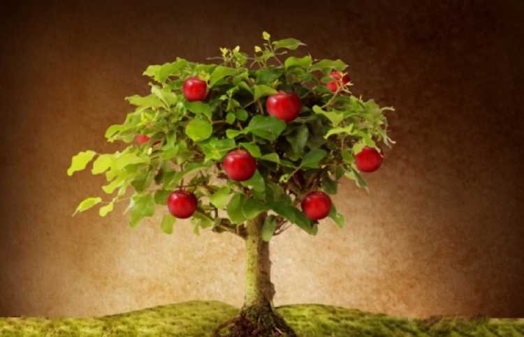 graphic image of an apple tree