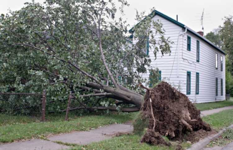 a tree uprooted in a storm