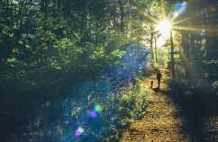 Daily Guideposts