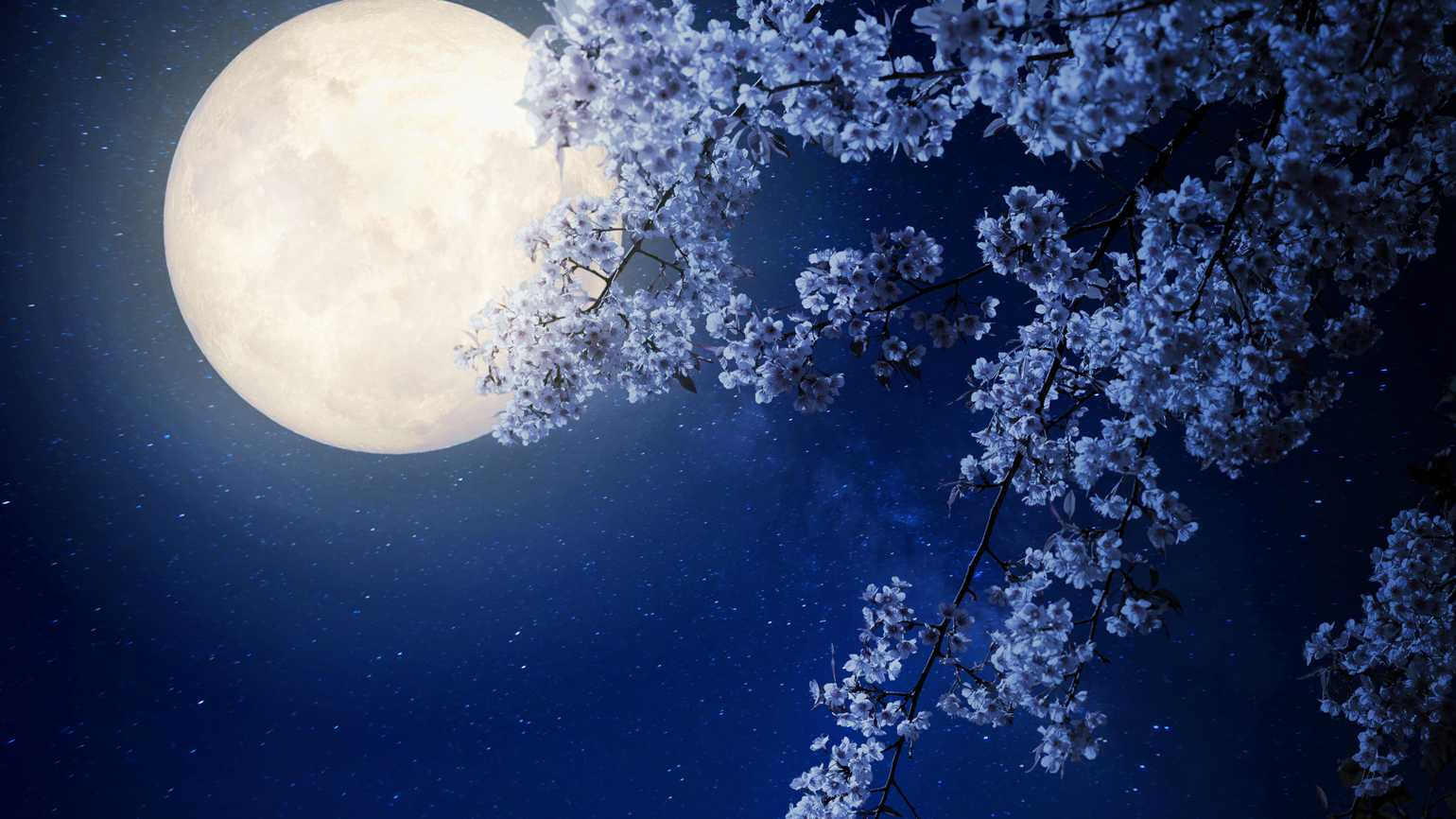 The heaven sent moon flower guideposts beautiful cherry blossom sakura flowers with milky way star in night skies full izmirmasajfo