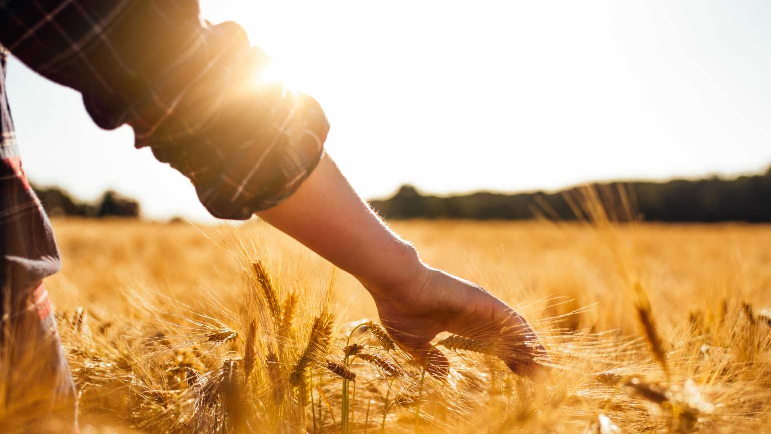 a hand touches blades of golden wheat as the sunlight beams down. Overcoming fear as a caregiver