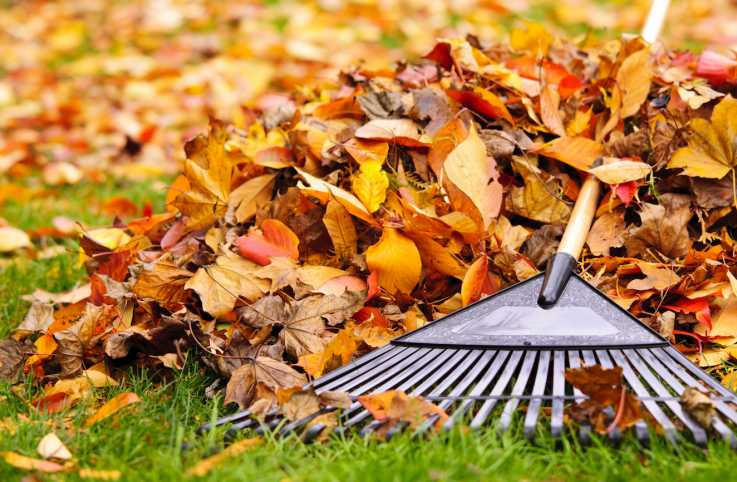 Raking leaves, doing a good job.