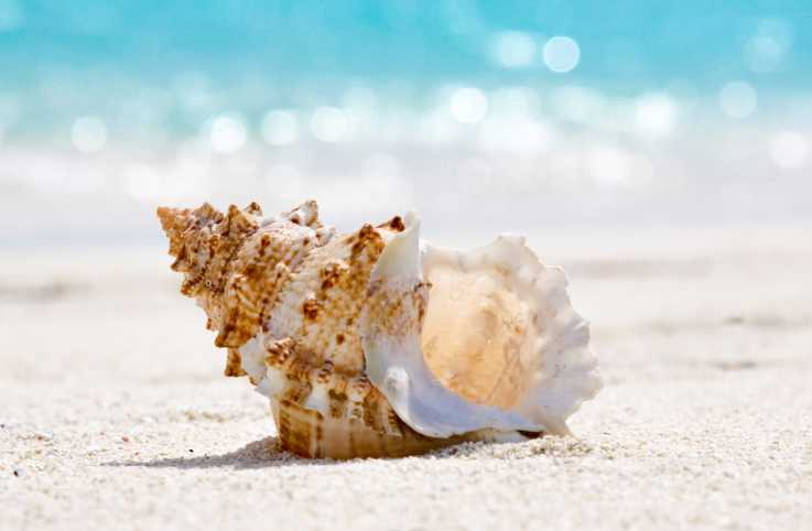 The wonder of seashells.