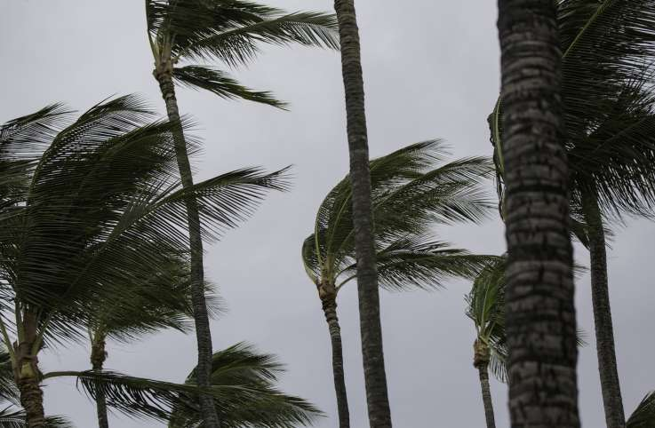 Palm trees in a storm