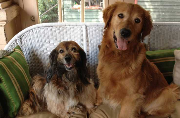 Guideposts: Peggy Frezon's dogs, Kelly and Ike!