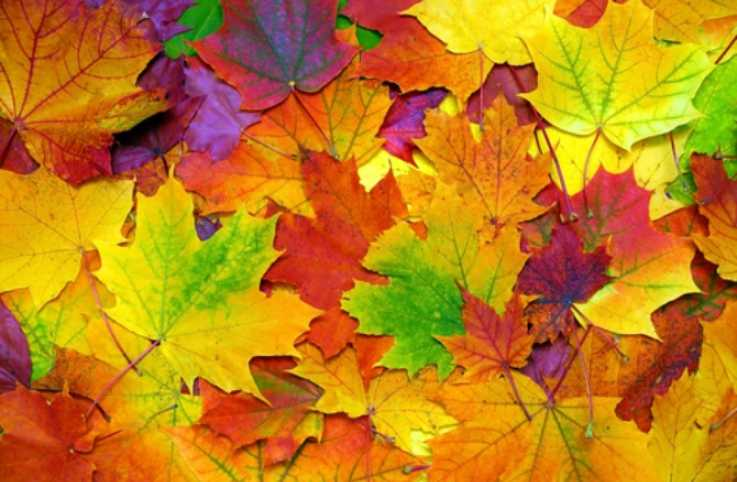 Celebrate the fall season with this autumn prayer.