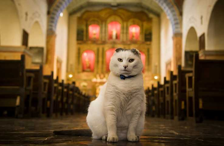 Guideposts: Sula, Old Mission San Juan Bautista's feline minister