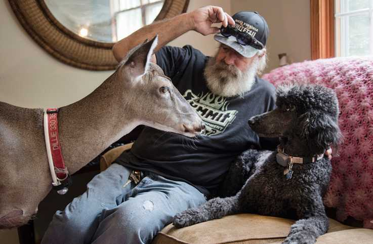 Dillie is best buds with black standard poodle, Willie, pictured here with Melanie's husband, Steve.