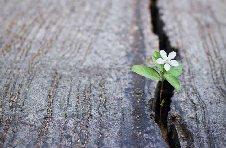 A flower blooming through the crack