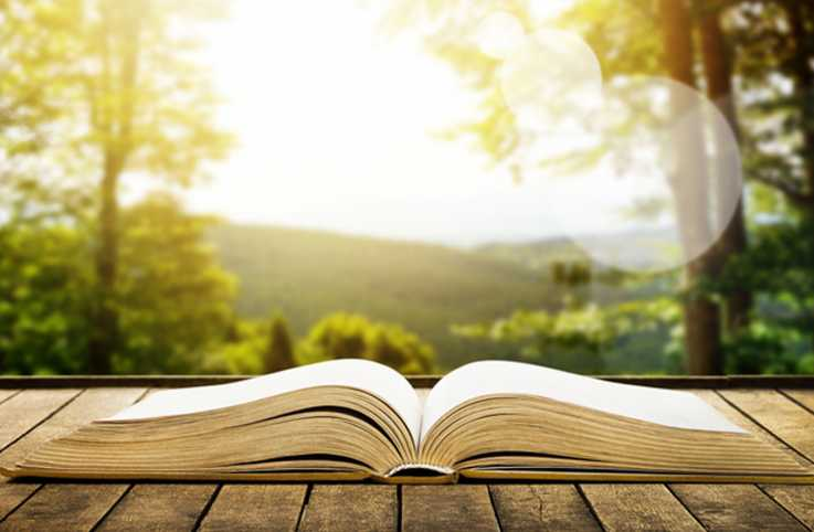The Bible opened on a sun lit ledge in a forest.