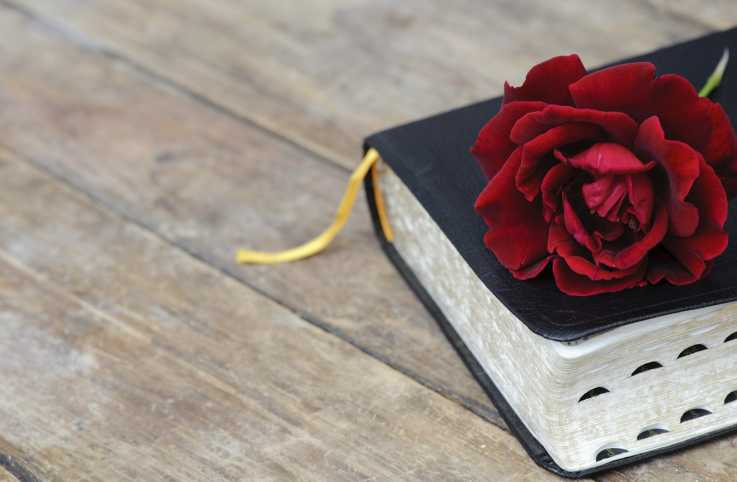A red rose rests on a closed Bible.