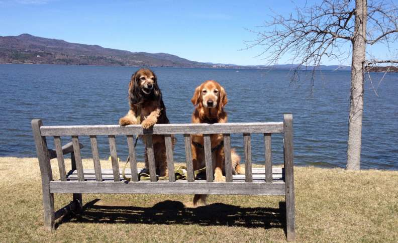 Labor Day Activities: Kelly and Ike relax on a lakeside bench