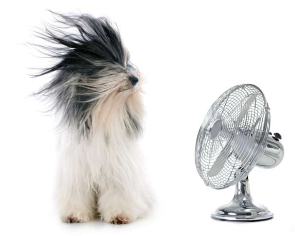 a long-haired dog sits in front of a fan