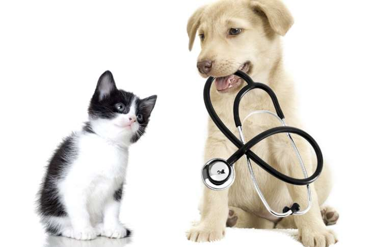 dog and a cat with a stethoscope