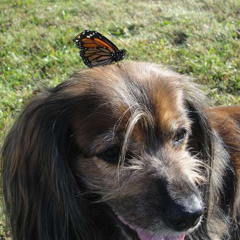 Labor Day Activities: Kelly relaxes with a butterfly friend.