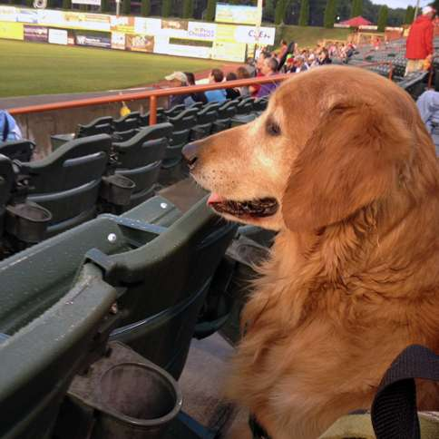 Labor Day Activities: Ike takes in a ballgame.