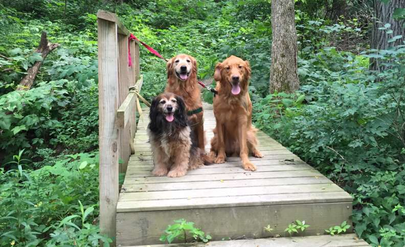 Labor Day Activities: Kelly, Ike and Zeke spend some time in the great outdoors