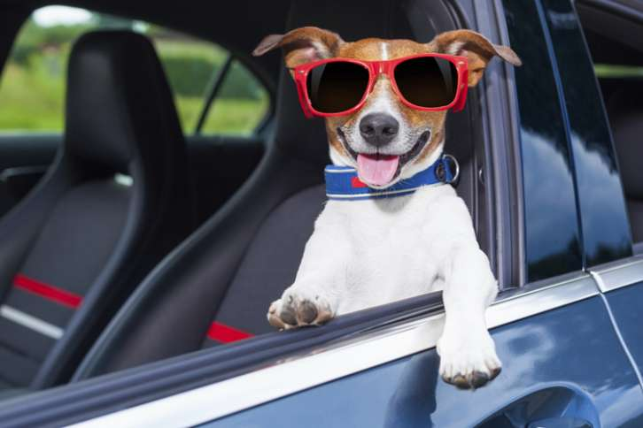 a dog in sunshades hangs out of the driver's side window