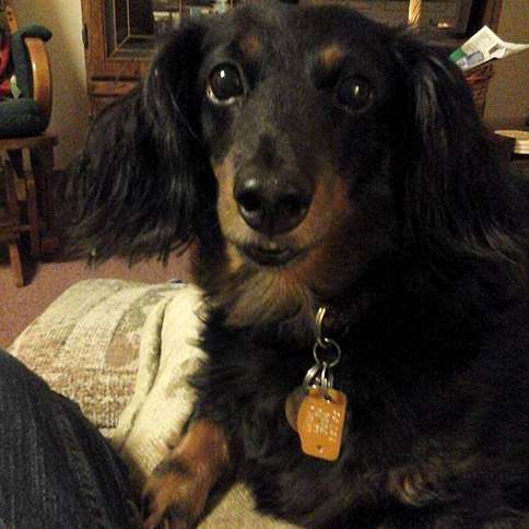 Guideposts: Toby Matthew is the first pet Marsha M., age 64, has ever had.