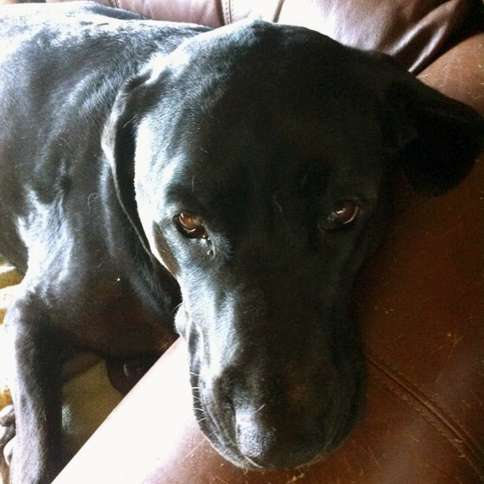 Guideposts: Kingston, says Elinor L., brings comfort and love wherever he goes.