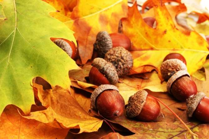 But why do I never notice Your acorns until they fall from the tree?