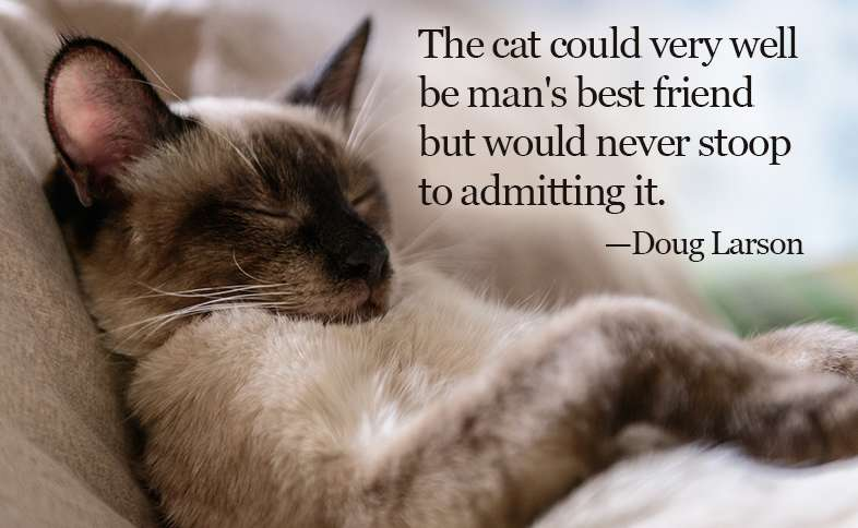 The cat could very well  be man's best friend but would never stoop to admitting it. ―Doug Larson