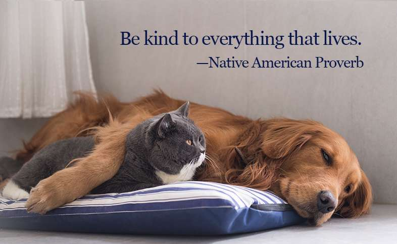 Be kind to everything that lives. ―Native American Proverb