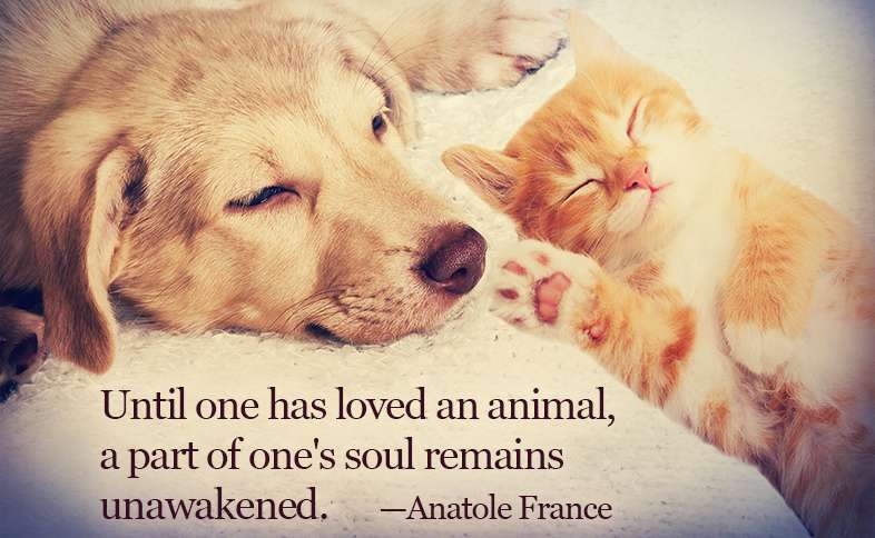 Until one has loved an animal, a part of one's soul remains unawakened. ―Anatole France