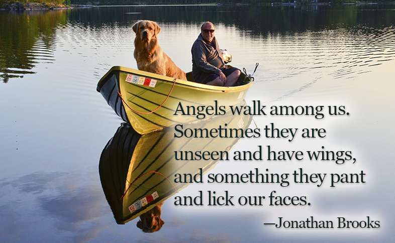 Angels walk among us. Sometimes they are unseen and have wings, and something they pant and lick our faces.  ―Jonathan Brooks