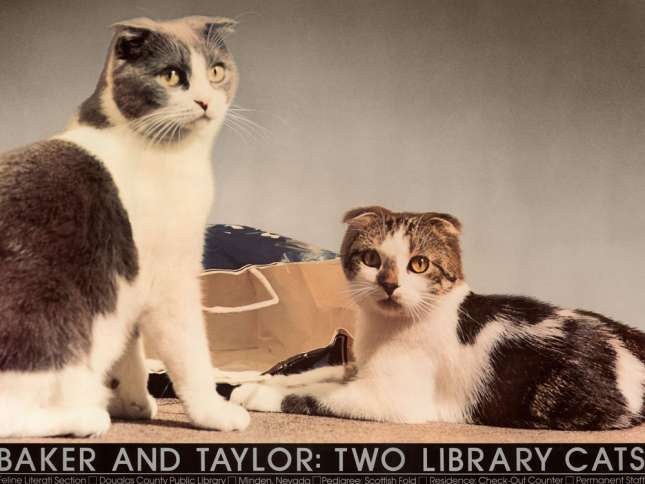 Baker and Taylor cats first poster