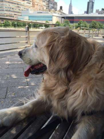 Millie enjoying a breeze off the Hudson from her favorite bench at the Chelsea piers