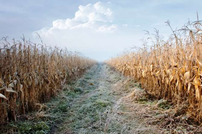 The last of the corn and the first frost, they come with the harvest moon.