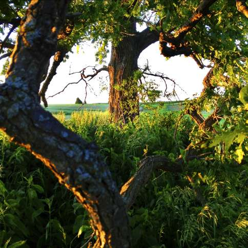 Guideposts: The gnarly limbs of That Tree frame its trunk in the shape of a natural heart.