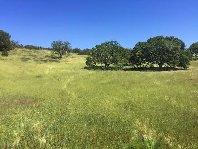 A sweeping field of green in Pinnacles State Park in Big Sur.