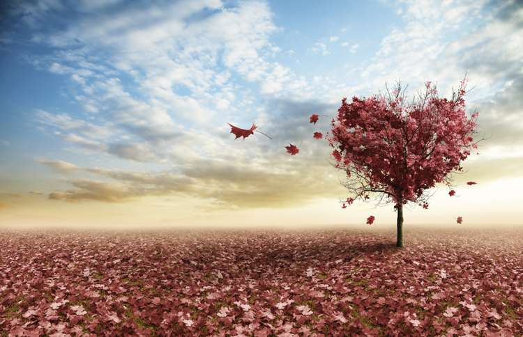 a tree's red autumn leaves shaped in a heart, symbolizing the love in John 15:12-13