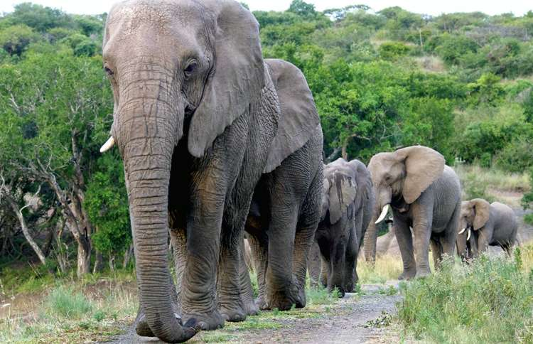 Guideposts: The elephants Lawrence loved filed by in a procession on the day of his memorial service