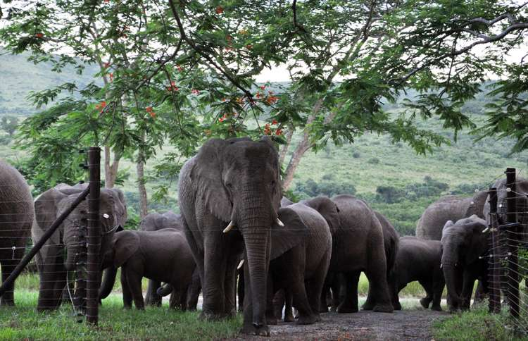 Guideposts: Lawrence's elephants returned to pay tribute to him on the anniversary of his memorial service