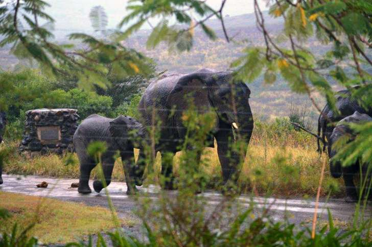 Guideposts: The elephants returned on the same day in 2014 and 2015