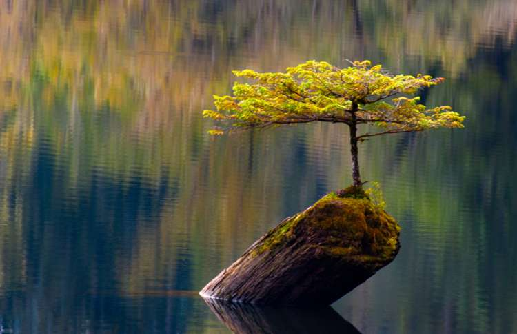 Guideposts: It seems impossible, but this fir tree clings to life on a tiny, rocky outcrop in the middle of Fairy Lake in British Columbia, Canada.