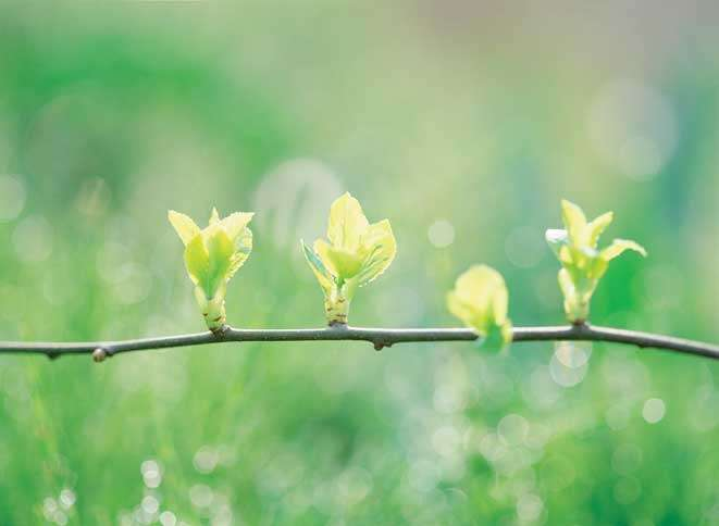 Guideposts: Tiny green leaves sprout on a tree branch.