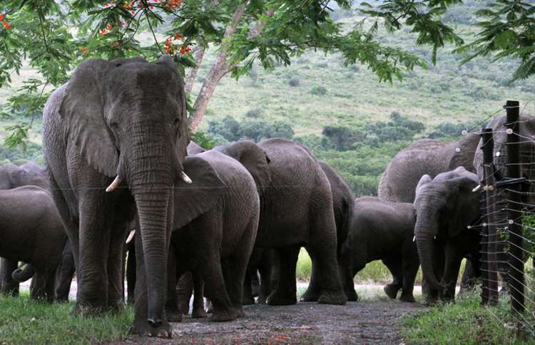 Guideposts: Lawrence Anthony was a wildlife conservationist from South Africa, who adopted and rehabilitated a herd of wild elephants on his game reserve, Thula Thula, in 1999.