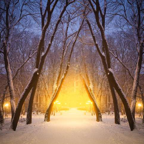 Guideposts: A light glows from deep within a snow-covered forest