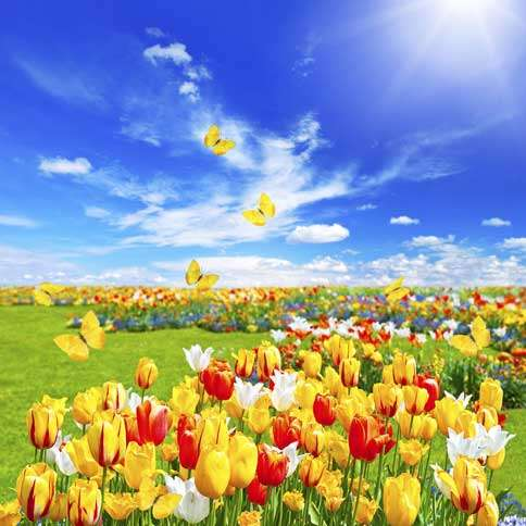 Guideposts: A field of colorful tulips under deep blue sky