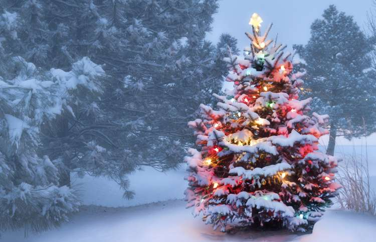 Guideposts: A glowing Christmas tree in a snow-covered opening of a forest