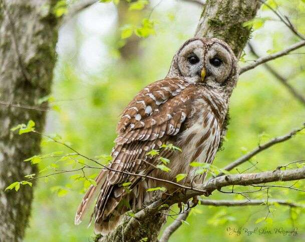 Guideposts: The joy of quiet moments spent with a barred owl in the woods of the State Botanical Garden of Georgia.